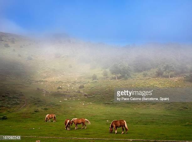 Caballos en la montaña en un día de niebla