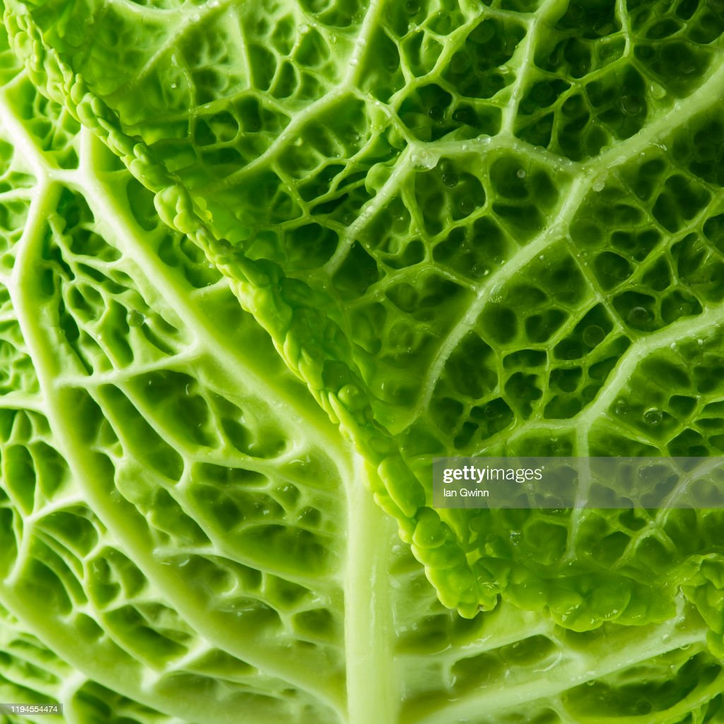 Cabbage Abstract : Stock Photo