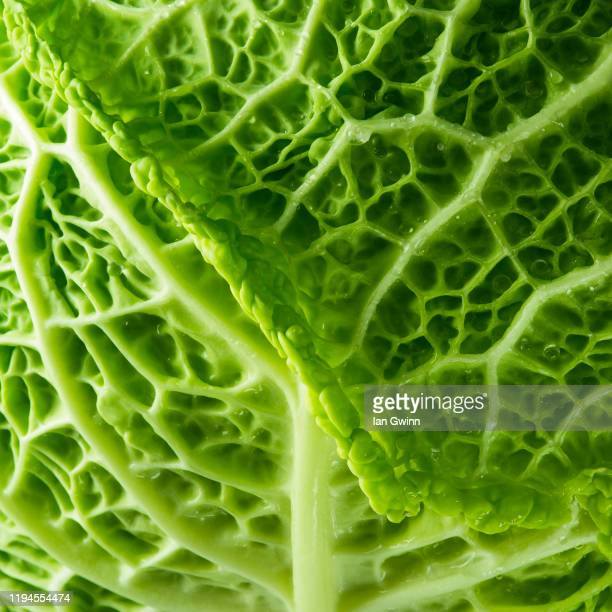 cabbage abstract - ian gwinn bildbanksfoton och bilder