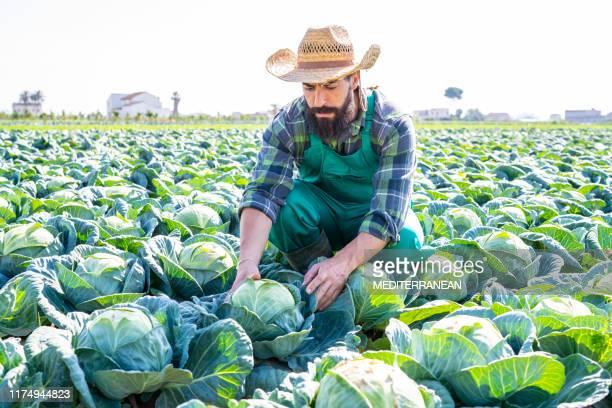 kool veld boer man met hoed - kool kool familie stockfoto's en -beelden