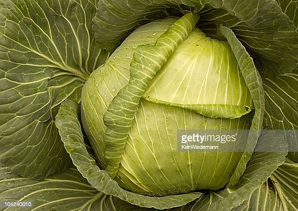 Cabbage Head