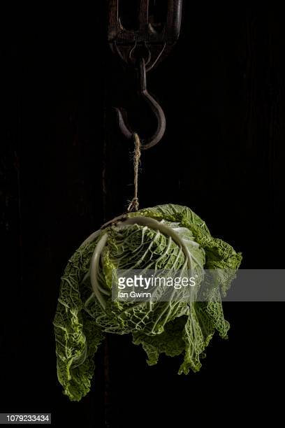 cabbage on hook - ian gwinn stock pictures, royalty-free photos & images
