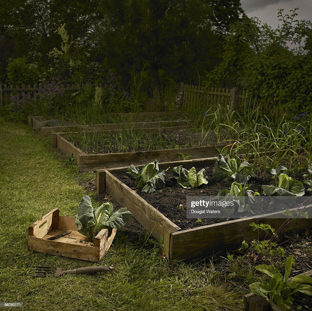 Cabbage Patch In Country Garden Stock Photo | Getty Images