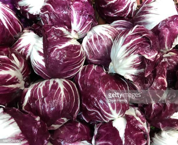 cabbage - repolho - fotografias e filmes do acervo