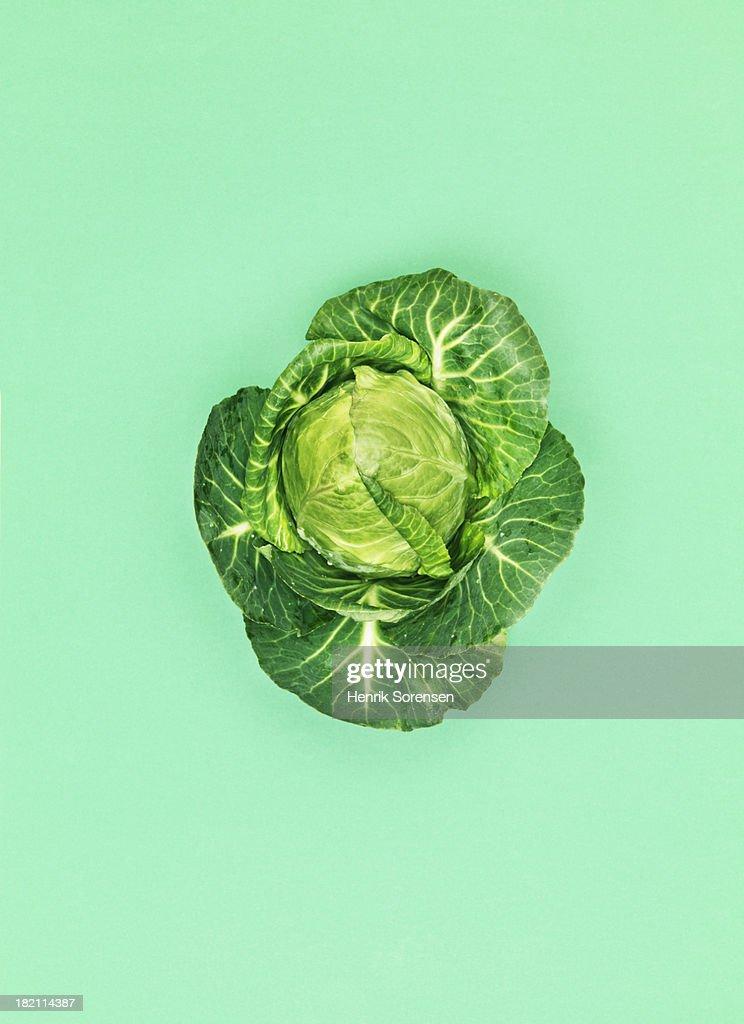 Cabbage : Stock-Foto