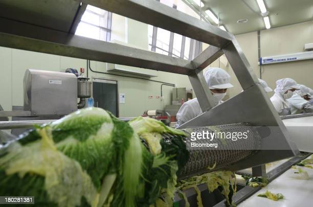Cabbages are washed by a washing machine on the production line at the Gamchilbaegi Co kimchi factory in Gwangju South Korea on Tuesday Sept 10 2013...