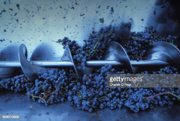 cabernet grape harvest in napa valley - wine harvest stock pictures, royalty-free photos & images