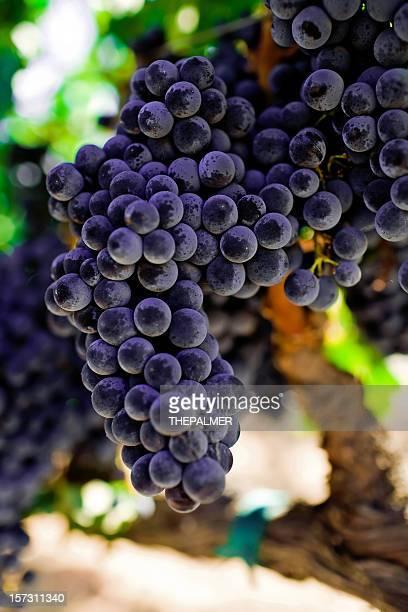 cabernet grapes - cabernet sauvignon grape stock pictures, royalty-free photos & images