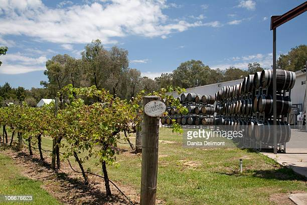 Cabernet Sauvignon grape vines near barrels, Hunter Valley, New South Wales, Australia
