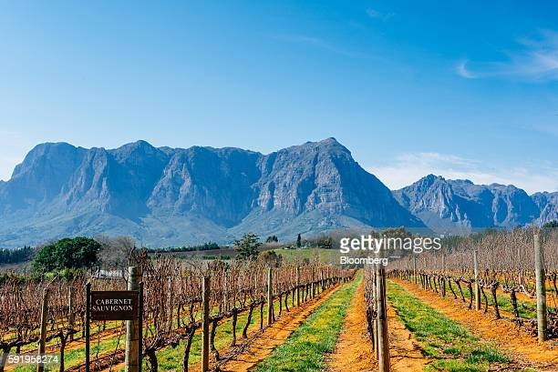 A cabernet sauvignon sign sits beside grape vines on the slopes of the Botmaskop mountain peak at the Delaire Graff Estate in Stellenbosch South...
