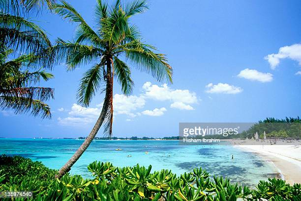 Cable Beach and Palm Tree, Nassau, Bahamas