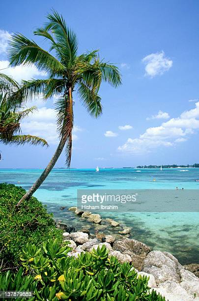cable beach and palm tree, nassau, bahamas - cable beach bahamas stock photos and pictures