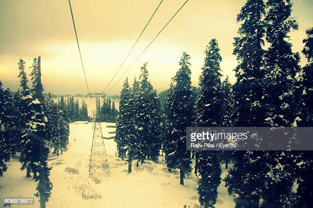 Cable Car Amidst Snow Covered Trees At Gulmarg