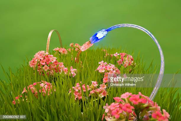 USB cable connection among flowers, close-up