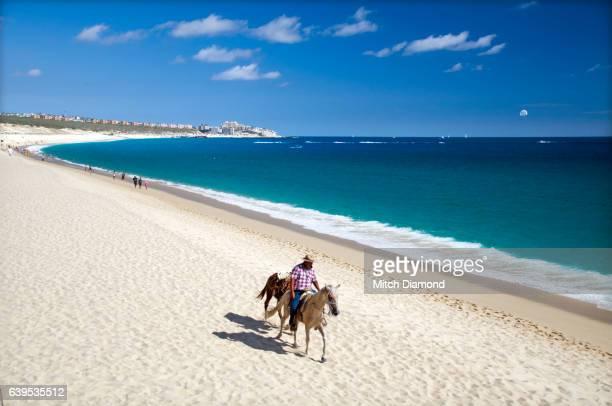 Cabo san Lucas Beach Horse Activities