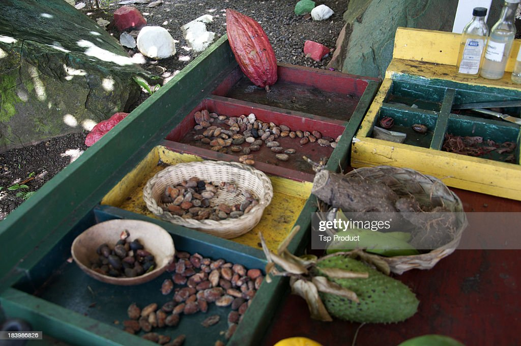 Cacao beans and roots at spice farm stand, Grenada : Stock Photo