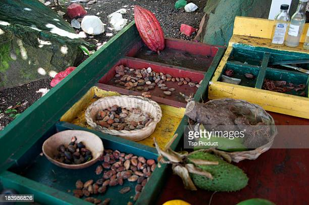 Cacao beans and roots at spice farm stand, Grenada