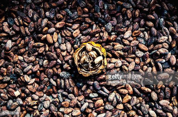 Cacao beans (Theobroma cacao) drying