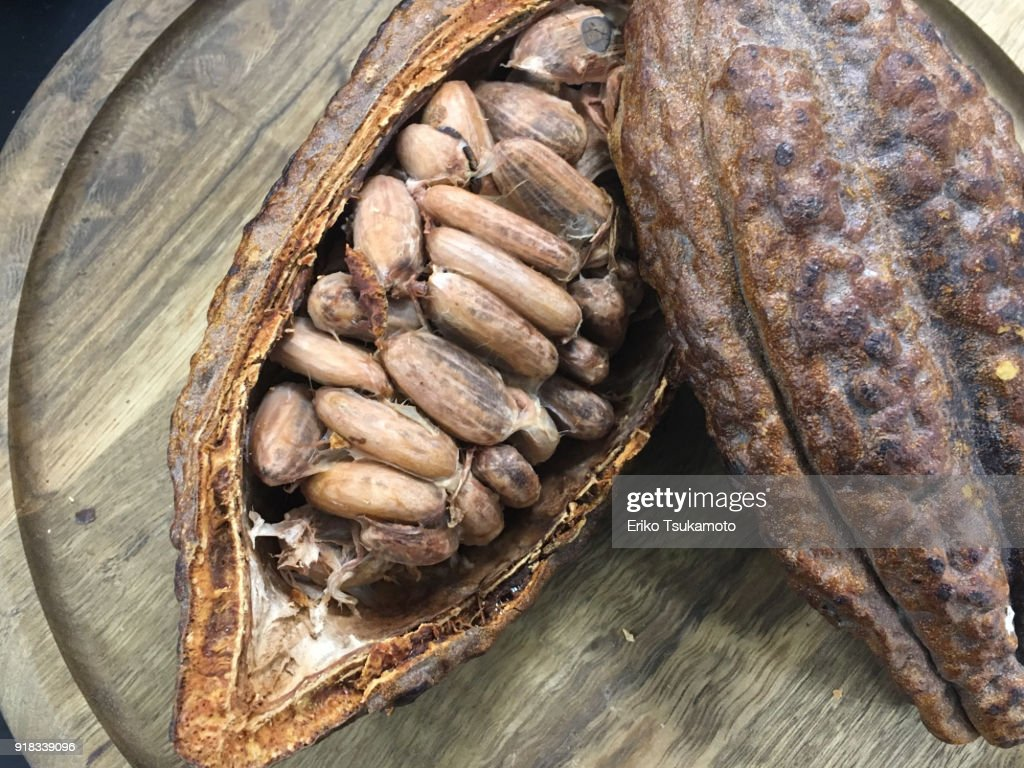 Cacao beans in a cacao pod : Stock Photo