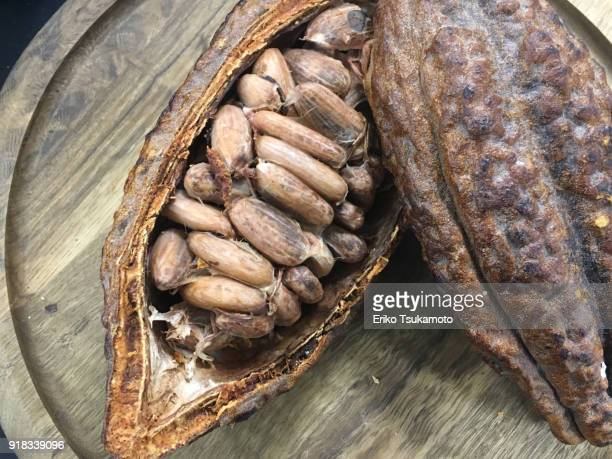 cacao beans in a cacao pod - theobroma stock photos and pictures
