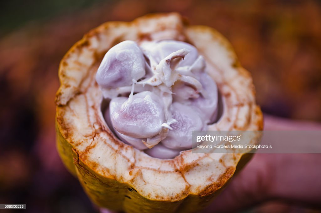 Cacao beans, Nicaragua : Stock Photo
