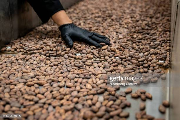 cacao beans on a production line - chocolate factory stock pictures, royalty-free photos & images