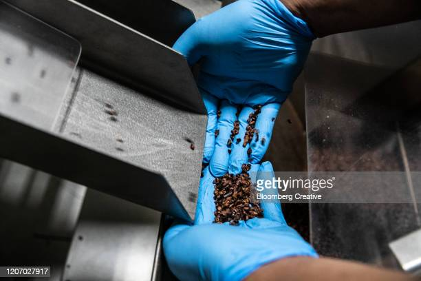 cacao beans on the production line - chocolate factory stock pictures, royalty-free photos & images
