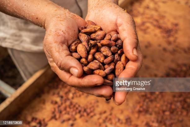 cacao beans - genot stockfoto's en -beelden
