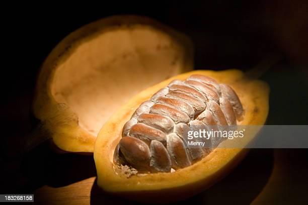Cacao-Bohnen