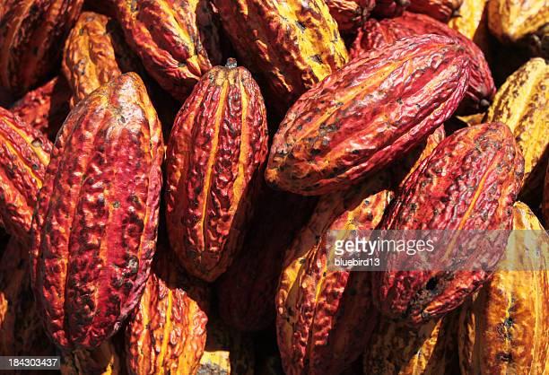 cacao-bohnen - theobroma stock-fotos und bilder