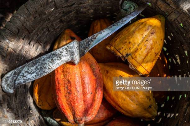 cacao fruits and knife and basket - theobroma foto e immagini stock
