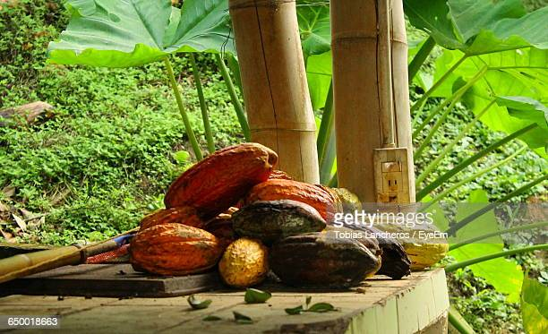 Cacao Fruits On Floor By Plants