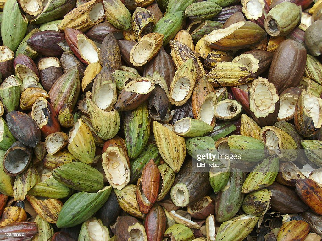 Cacao pods : Stock Photo