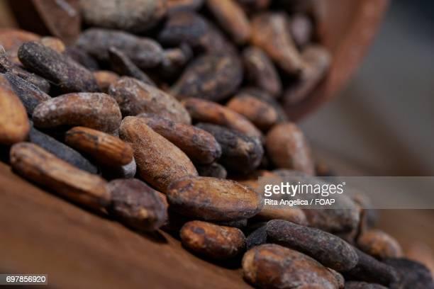 cacao seeds - theobroma foto e immagini stock