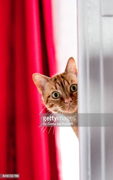 cache cache - chat roux photos et images de collection