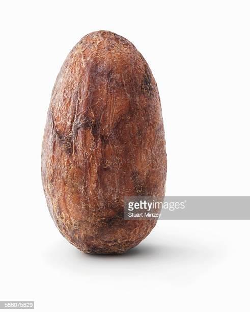 Cacoa bean upright on white background