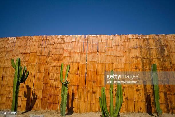 cacti in front of a bamboo fence, mancora, peru - mancora fotografías e imágenes de stock