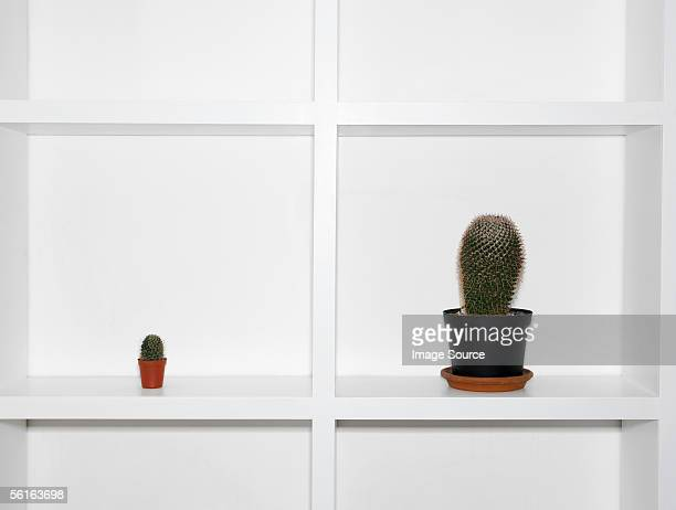cacti on a shelf - small stock pictures, royalty-free photos & images