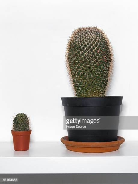 Cacti on shelf