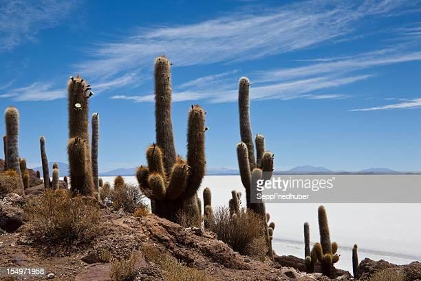 Cactos no Salar de Uyuni Bolívia
