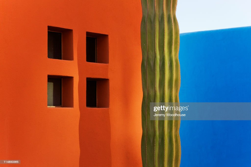 Cactus against colorful walls : Stock Photo
