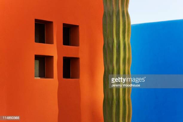 cactus against colorful walls - mexique photos et images de collection