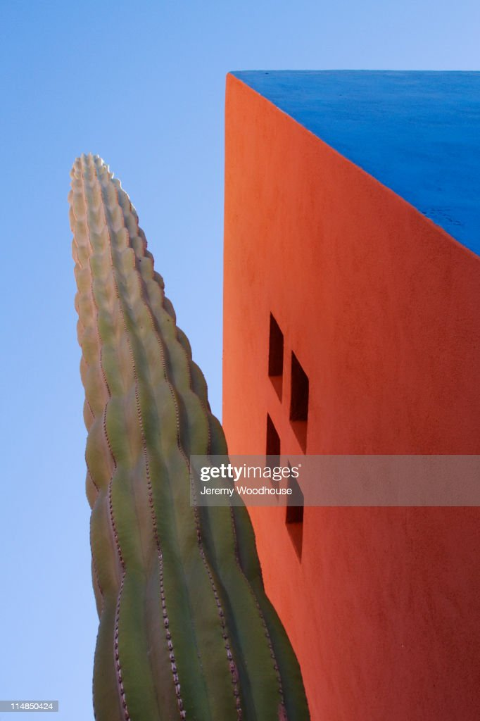 Cactus against colorful walls : Photo