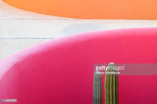 Cactus against pink wall