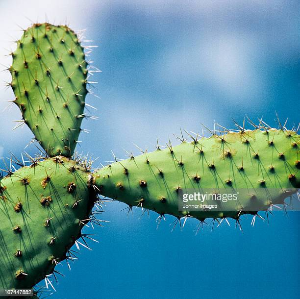 Cactus against sky, low angle view