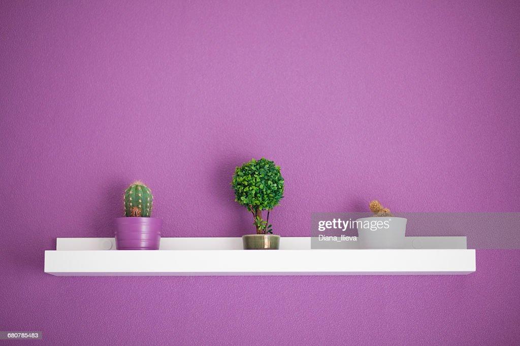 Cactus And Bonsai Plants On A Shelf With Purple Wall Foto de
