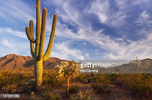 cactus and desert landscape with bright blue sky