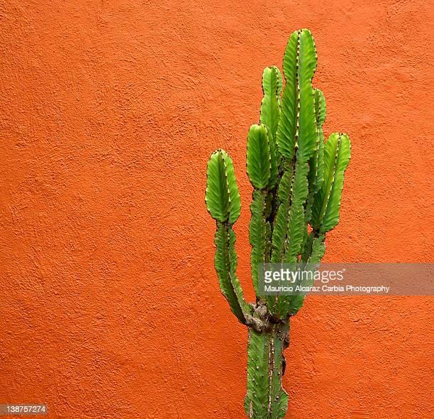 Cactus and orange wall