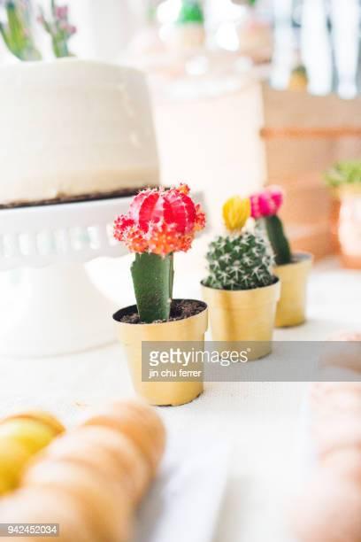 Cactus and Succulent Baby Shower Succulent Decor