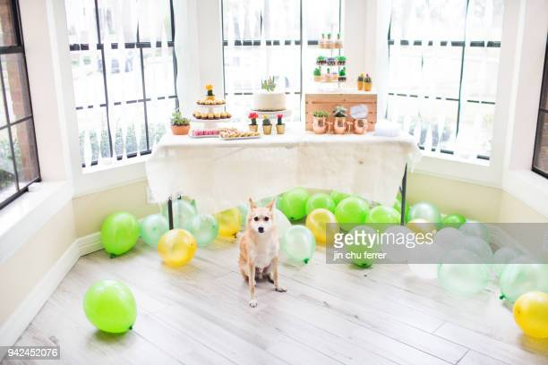 Cactus and Succulent Baby Shower With Dog